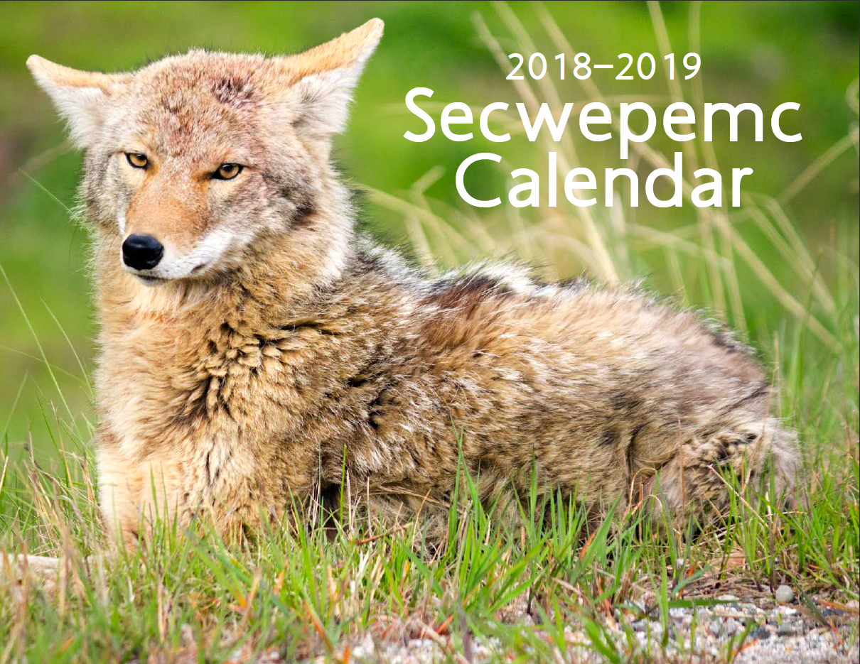 Secwepemc Calendar 2018-2019 photo